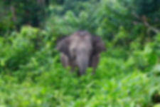 Sappraiwan's Elephant Nature Program 4 Days/3 Nights