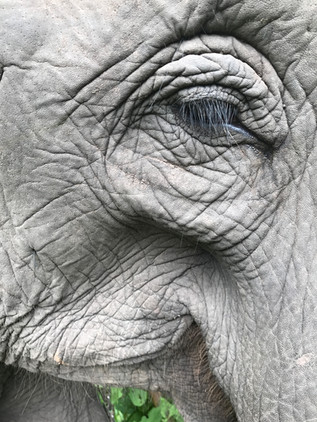 A wise mother elephant