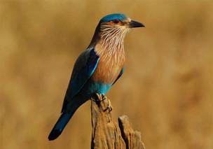 Over 150 species of birds