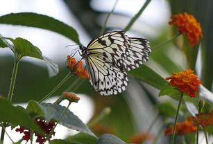 Many beautiful butterflies