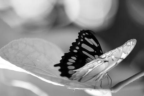 forzes-vlinder.jpg