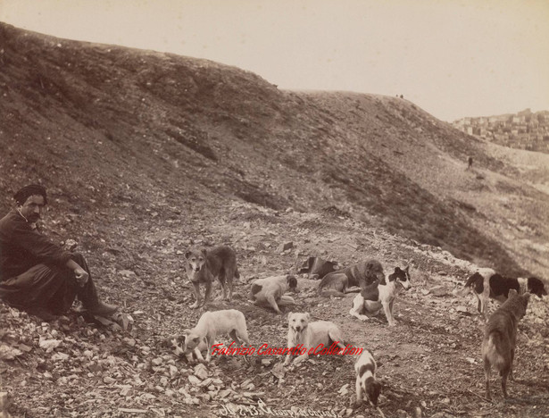 Goupe de chiens 243. 1890s
