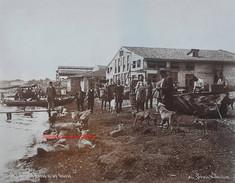 Groupe d'ouvriers Turcs et les chiens 241. 1890s