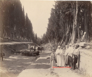 Cimetiere turc a Scutari 257. 1890s