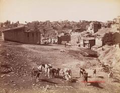 Groupe de chiens 242. 1890s