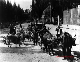 Chariots turcs et le cimetiere a Scutari 291. 1890s