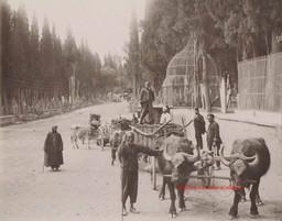 Chariots turcs et le cimetiere a Scutari 290. 1890s