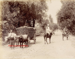 Route de Guemleik chariots et paysans turcs. Brousse 107. 1890s