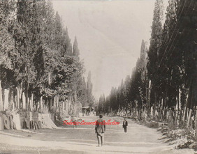 Cimetiere turc a Scutari 199. 1880s