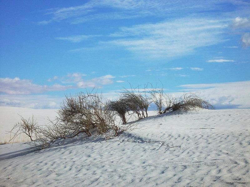 White sands, végétation.