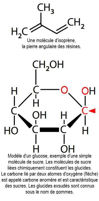 Molecule d'isoprène et glucose.