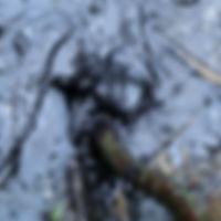 Bitume, Puy de la Poix.jpg