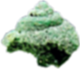 Gasteropode fossilise en emeraude small0
