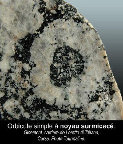 Orbiculesimple à noyau surmicacé.