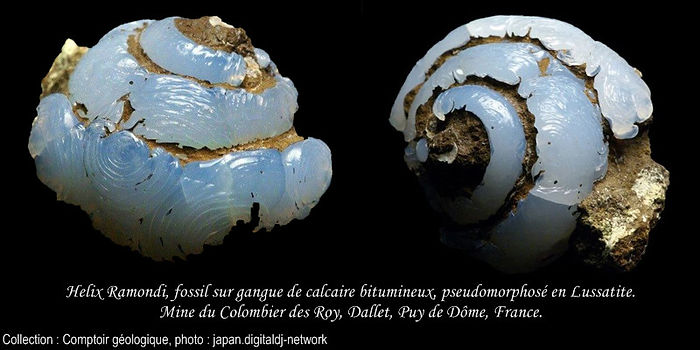Helix Ramondi pseudomorphose Lussatite.