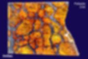 Pallasite d'Imilac