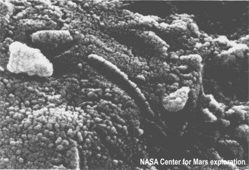 ALH84001 formes minérales supposées être des fossiles bactériens.
