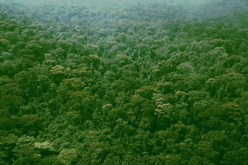 Forêt primaire au Congo.