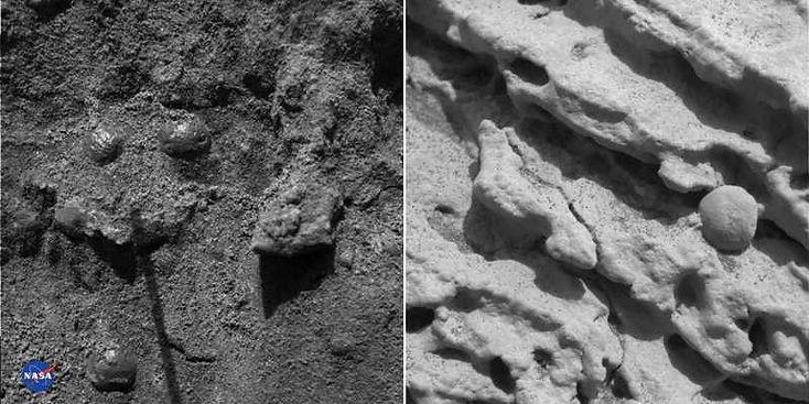 Sphérules martiennes dans leurs sédiments de formation.