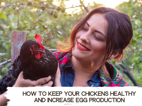 How to keep your chickens healthy and increase egg production