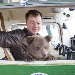 """TVERNEWS: Спаситель тверского медвежонка Мансура лётчик Андрей Иванов получил """"Лохматый Оскар"""""""