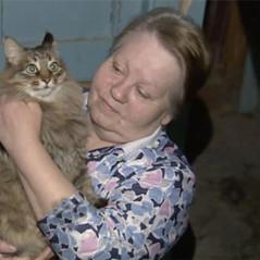 ЗНАМЯКАЛУГА: Кошка Машка из Обнинска претендовала на «Лохматый Оскар»