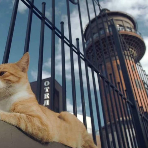 "KASKAD: В День кота в Зеленонрадске вручат ""Лохматый оскар"""