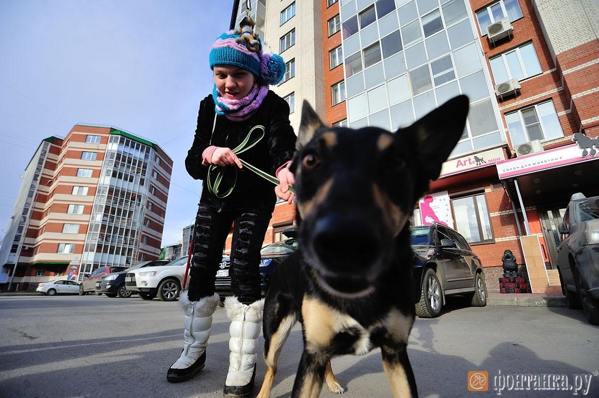 Проект «Ева. Собаки для жизни», Санкт-Петербург (РОССИЯ)