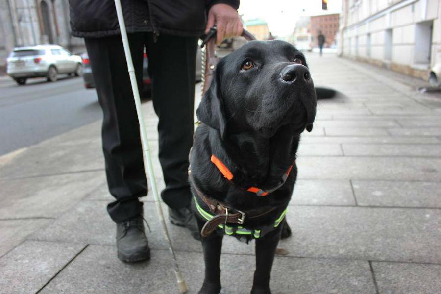 2 номинант - Собака-поводырь Акс,  Санкт-Петербург (РОССИЯ)