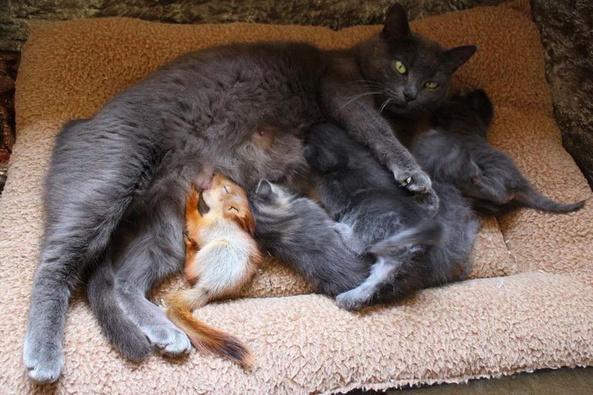 Кошка Мурка, Бахчисарай, Крым (РОССИЯ)