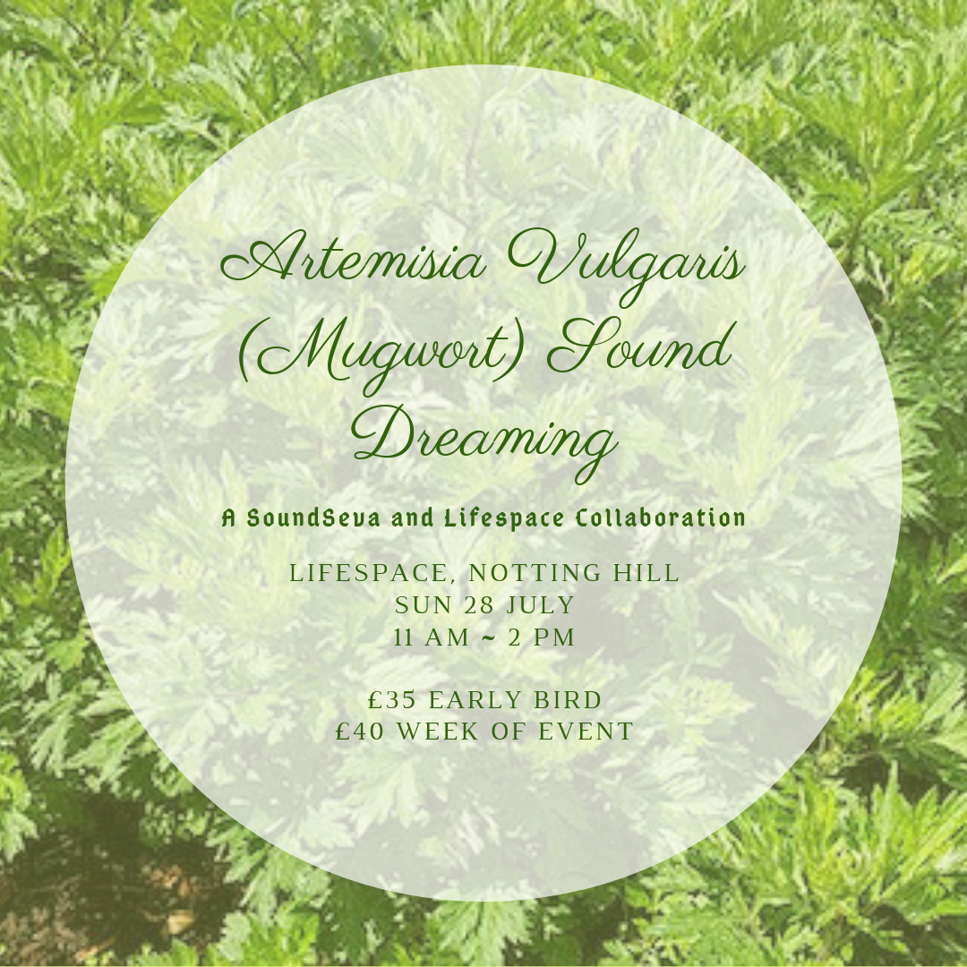 Mugwort Sound Dreaming Ceremony