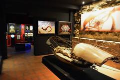 Naïa Museum Saison4 2018