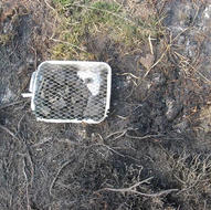 Disposable BBQ (Forest fire)