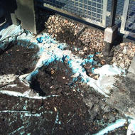 Potting Compost