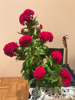 2017/9/17、聖日礼拝のお花