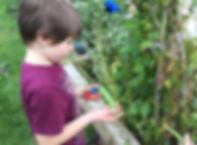 Gardening maple.jpg