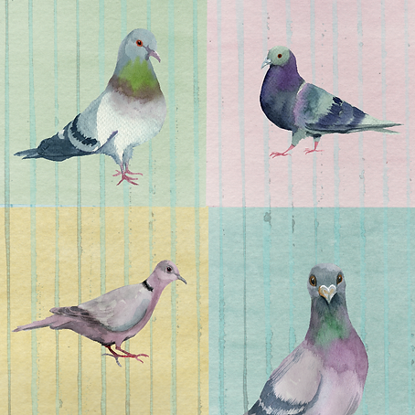 Pigeon Party KW-02