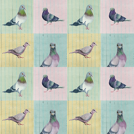 Pigeon Party KW-01