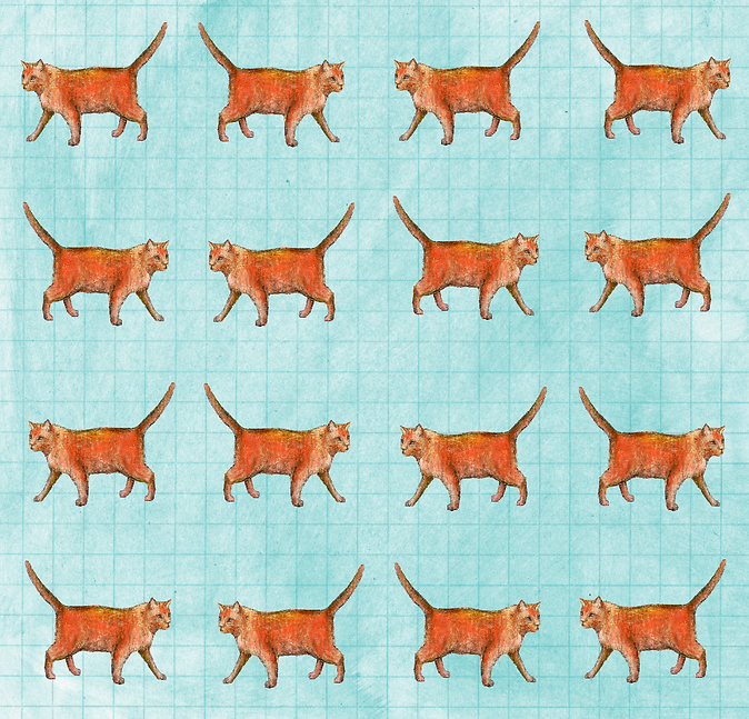 Cats KW-01