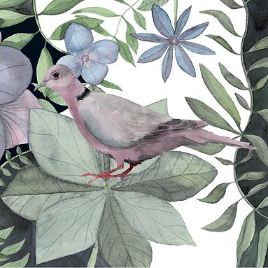 Pink Pigeon 1 KW-01