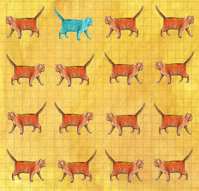 Cats KW-02