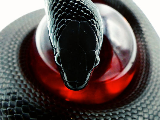 Kingsnake Care Guide | Creatures of Nightshade