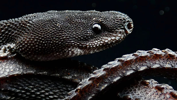 Dragon Snake.jpg