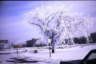 Hoar on tree at Michigan State University 1970 on creation6000.com