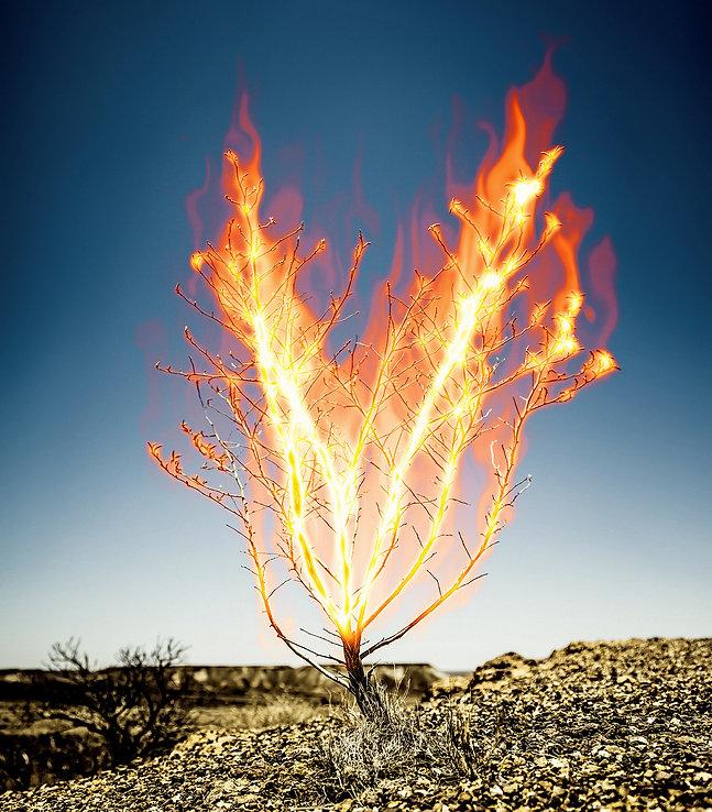 The burning Bush that Moses saw
