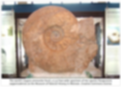 fossil ammonite.png