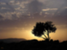 Sunset on hill in Galilee by John Leslie on creation6000.com