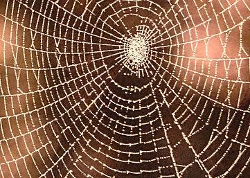 spiderweb_InPixio.jpg