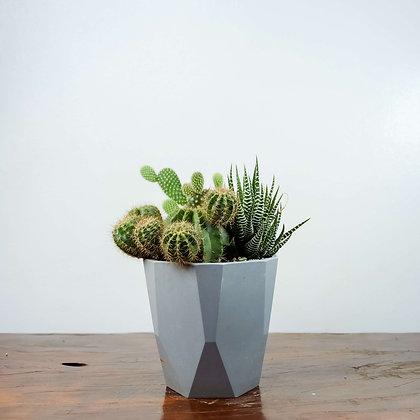 Succulent & Cacti Arrangement