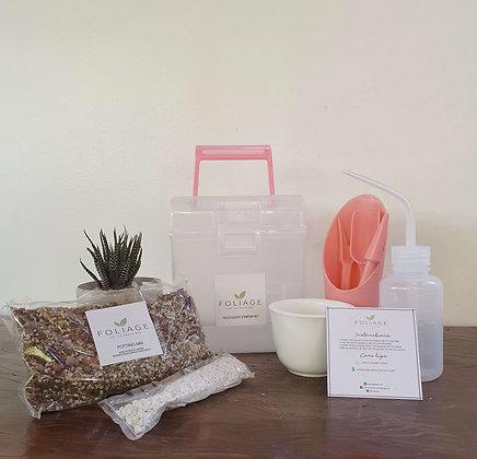 Succulent Starter kit